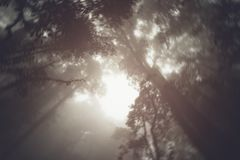 Abstract silhouette upward tree in forest with fog in morning. Abstract silhouette upward tree in forest with fog in morning Stock Photography