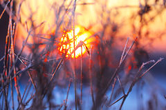 Abstract silhouettes of plants in the frost at sunset Stock Photos