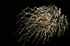 Abstract of Single Burst of Fireworks Stock Photos