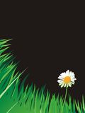 Abstract single daisy flower illustration in night vector illustration