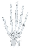 Abstract Skeleton Hand Royalty Free Stock Photography