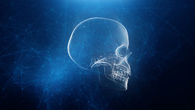 Abstract skull animation with blue plexus background. 4K Royalty Free Stock Photos