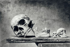 Abstract skull still life with scratch Foreground in black and w. Hite tone Stock Photography