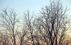 Abstract sky and branches Royalty Free Stock Image