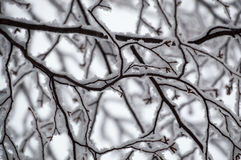 Abstract of snow laden birch branches looking up closeup. This black and white looking abstract design is random and squiggly and quite pretty.  It shows the Stock Photography
