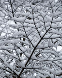Abstract of snow laden tree branches looking up closeup. This black and white looking abstract design is random and geometric and quite pretty.  It shows the Royalty Free Stock Photography