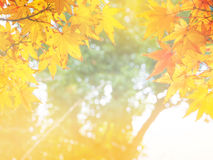Abstract Soft and blur autumn leaves Stock Images