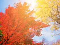 Abstract Soft and blur autumn leaves in Japan Stock Photo