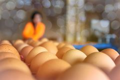 Abstract soft blurred and soft focus the eggs in the package, sorting from the chicken farm with the bokeh, beam ,light and lens f. Lare effect tone background royalty free stock image