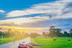 Abstract soft blurred and soft focus silhouette paddy rice field, the front of the hand bike, people driving the bicycle, the beau. Tiful sky and cloud with the Royalty Free Stock Image