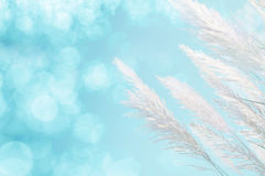 Abstract soft focus of cool blue lighting softness Feather Grass background stock image