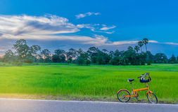 Abstract soft focus semi silhouette the bicycle,green paddy rice. Field with the beautiful sky and cloud in the evening in Thailand, the beam, light, and lens Royalty Free Stock Image
