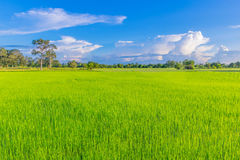 Abstract soft focus semi silhouette green paddy rice field with the beautiful sky and cloud in Thailand. Stock Photos