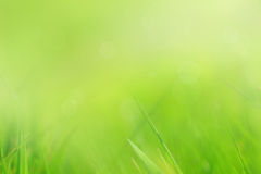 Abstract, soft grass background Royalty Free Stock Photos
