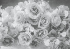 Abstract soft style silver rose flower. Made with oil paint effect Stock Images