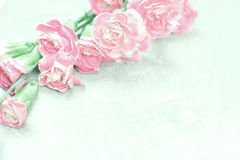 Abstract soft sweet pink flower background from Carnation flower Royalty Free Stock Images
