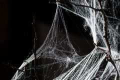 Abstract Spiderweb on black Royalty Free Stock Photo