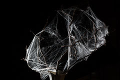 Abstract Spiderweb on black. Abstract Spiderweb on branch on black background stock images