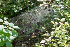 Abstract spiderweb on wild forest bushes Royalty Free Stock Photos
