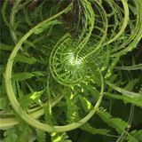 Abstract spiral of fern. With positive vibrations Royalty Free Stock Photography