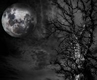 Free Abstract Spooky Tree And Moon Stock Photography - 37546502