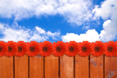 Abstract spring background. Red gerbera flower and Blue sky Royalty Free Stock Image