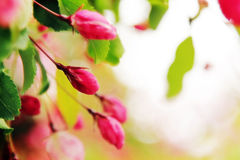 Abstract spring background Stock Photography