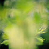 Abstract spring background Royalty Free Stock Photography