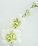 Abstract spring background with flowers Stock Photos