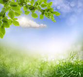 Abstract spring background Royalty Free Stock Photos