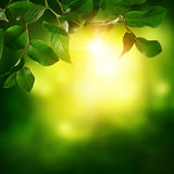 Abstract spring background royalty free stock photo