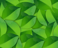 Abstract spring background with green leaves Royalty Free Stock Image