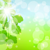 Abstract spring background with leaves. Royalty Free Stock Photography