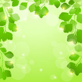 Abstract spring background with leaves. EPS10. Vector illustration royalty free illustration