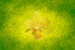 Abstract spring background with orchid Stock Photos