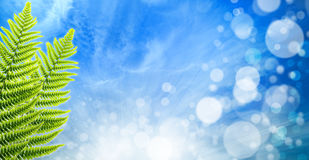 Abstract spring backgrounds Royalty Free Stock Photos