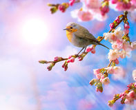 Abstract Spring border background with pink blossom Royalty Free Stock Image