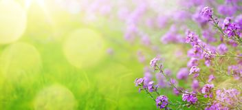 Abstract spring floral Background; spring flower and sunny beam royalty free stock photography