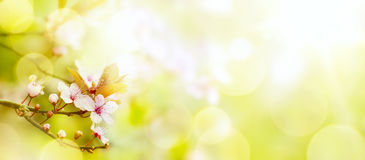 Abstract Spring flower background; Easter landscape stock photo