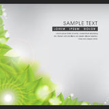 Abstract Spring Green Leaves Nature Background. This image comes with a vector illustration and can be scaled to any size without loss of resolution Stock Photography