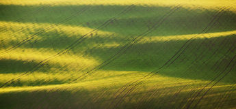 Abstract spring landscape with green fields at colorful sunset Stock Photography