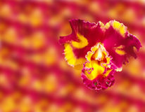 Abstract Spring orchid flowers close up  on blur flower background. This has clipping path Royalty Free Stock Images