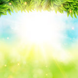 Abstract spring poster with shining sun and blurred background. Royalty Free Stock Image