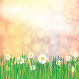 Abstract spring summer background. With grass Royalty Free Stock Photography