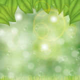 Abstract spring summer background. Blur background Royalty Free Stock Photos