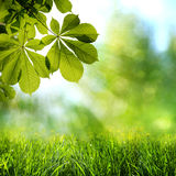 Abstract spring and summer backgrounds Stock Image