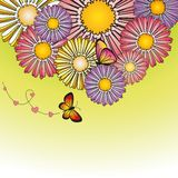 Abstract springtime colorful daisy flowers Royalty Free Stock Images