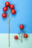 Abstract still life with tomatoes and branches. On a multi-colored background Stock Photography