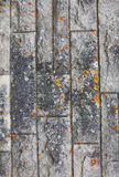 Abstract stone grunge texture with mold as background Stock Image