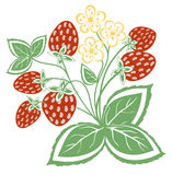 Abstract strawberry with leaves Royalty Free Stock Photo